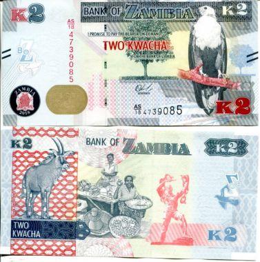 2 квача Замбия 2012 год